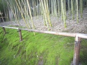 Bamboo grove moss