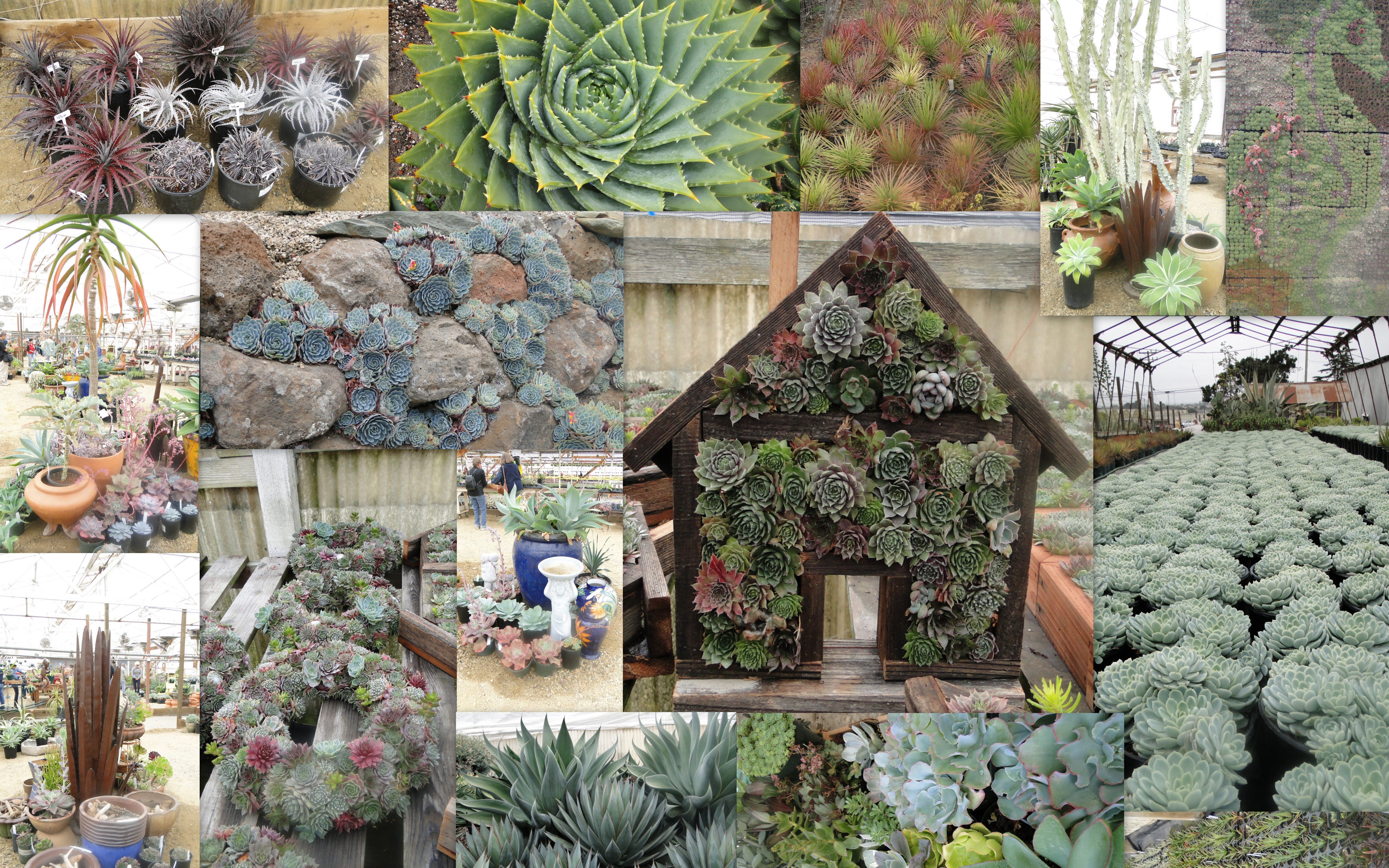 Succulent Garden Designs actually more than a few make it home to my garden after much trial and much more error resulting in a few dead plants i am sharing what has worked for Succulent Garden Extravaganza