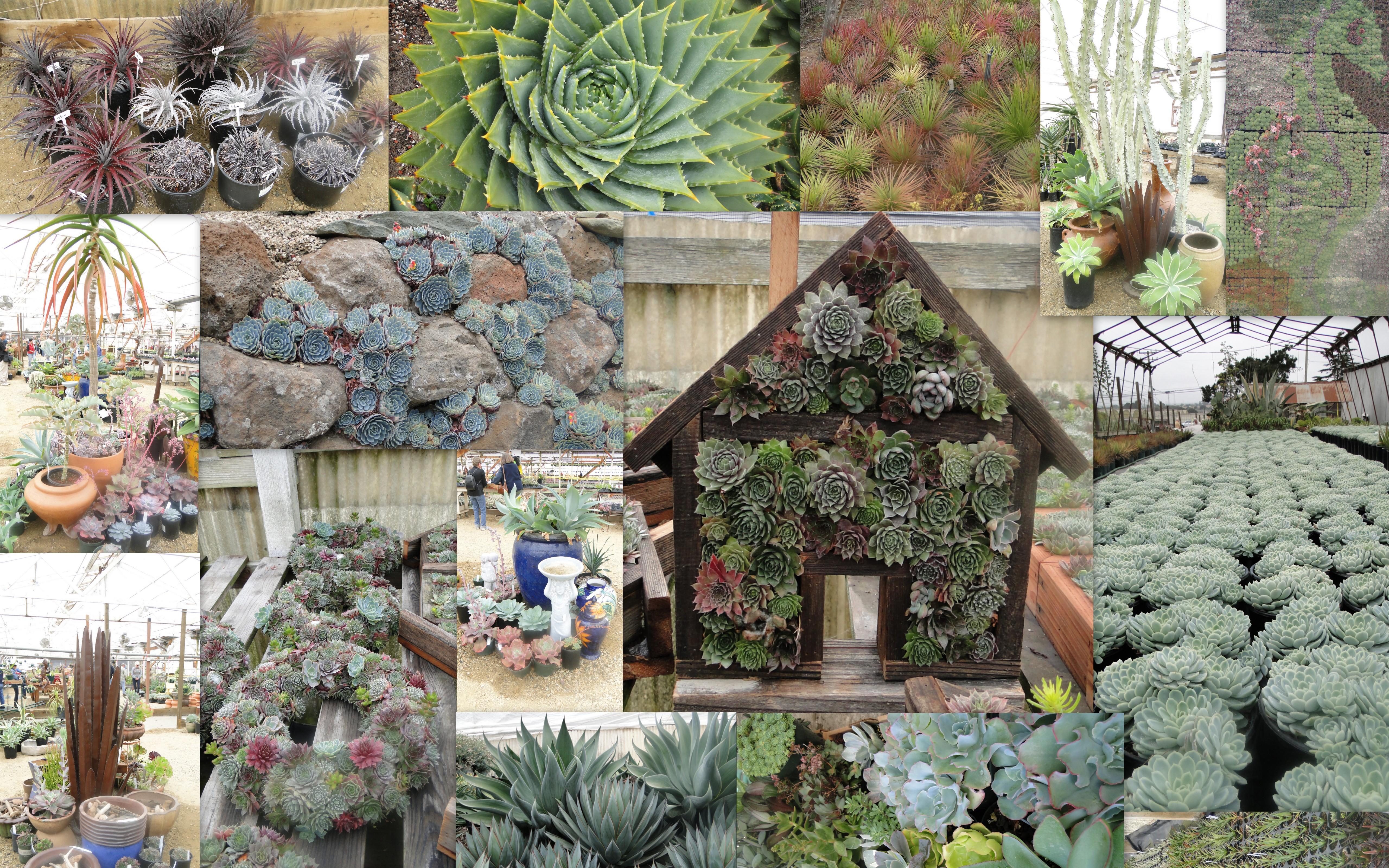 Succulent Garden Extravaganza