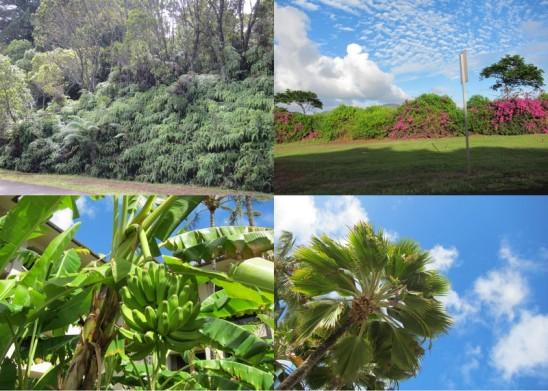 tropical plants1