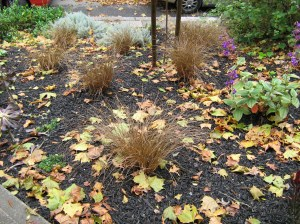 Be sure to rake and clean up leaves from planting beds before they cause damage!