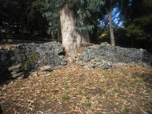 BEFORE: Eucalyptus tree breaking through mortared rock wall