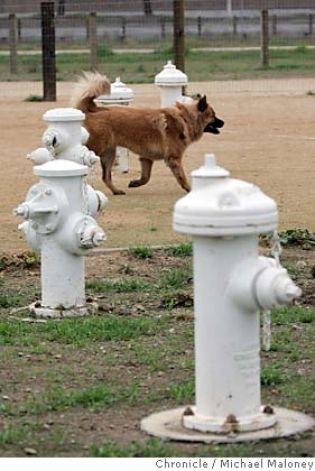 Fire hydrant marking posts in a San Mateo dog park combine function, upcycling and whimsy