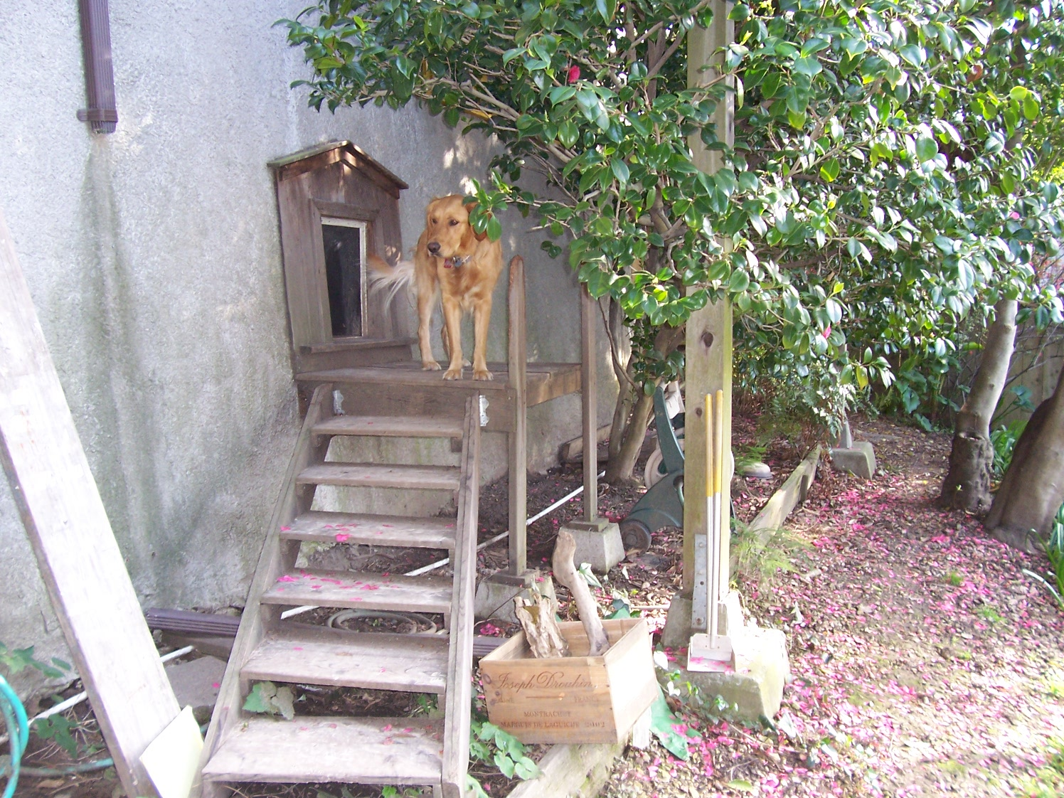 5 tips for a dog friendly garden lazar landscape