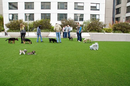 SynLawn play area for dogs in a rooftop garden in San Francisco